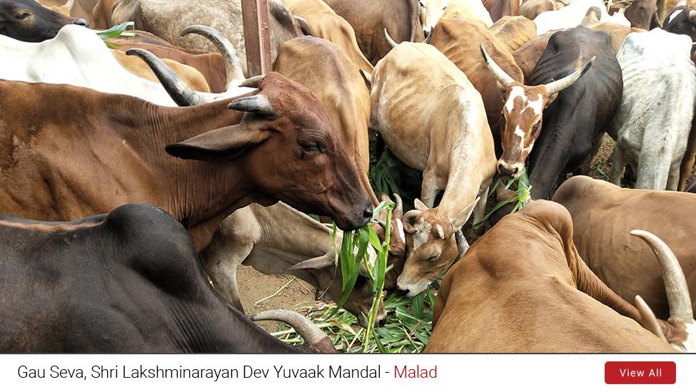 Malad : Gau Seva 2019