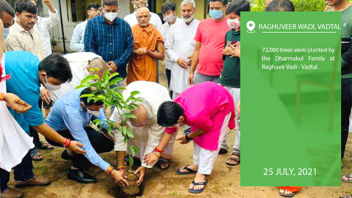 72,000 trees were planted by the Dharmakul Family at Raghuvir Vadi - Vadtal