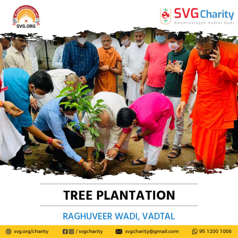 72,000 trees were planted by the Dharmakul Family at Raghuvir Vadi - Vadtal (25)